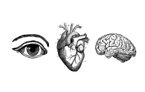 hjärta hjärna